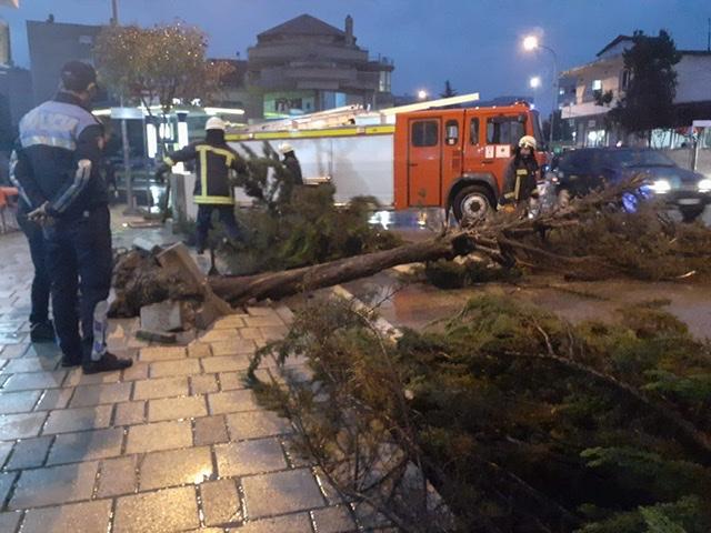 Moti i keq me shi dhe erë në Berat,rrëzohet pema në mes të rrugës. Fatmirësisht nuk ka pasur të lënduar.