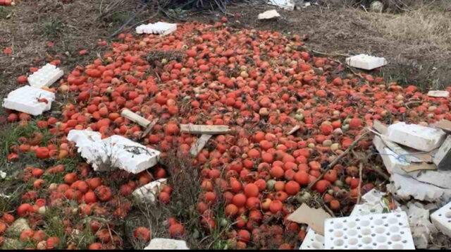 Moti acart i janarit dhe reshjet demtojne ne Fier produktet bujqesore te fermereve
