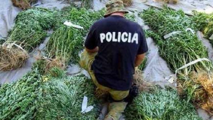 'Shefi i madh ishte nga Tirana', zbardhen përgjimet mes trafikantëve të drogës në Skrapar, si operonin bashkë me policët