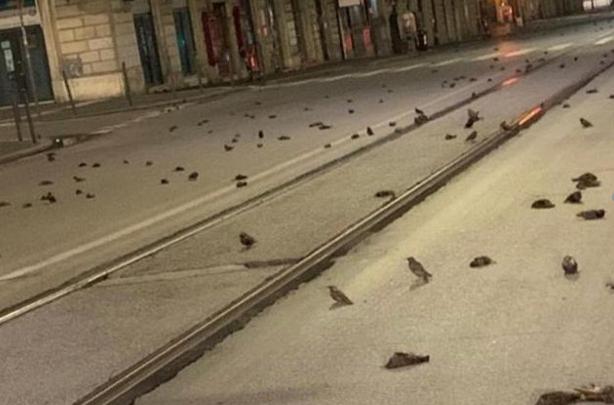 (VIDEO) Fishekzjarret për ndërrimin e viteve, qindra zogj ngordhin nëpër rrugët e Romës