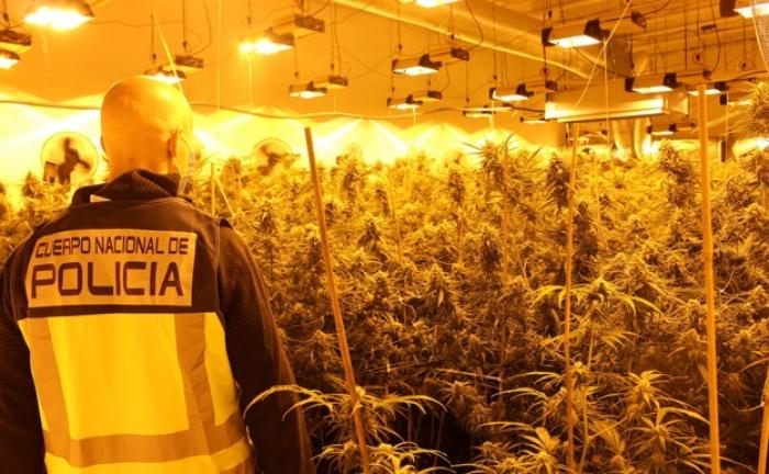 Sekuestrohet gjysmë ton marijuanë në Spanjë, në pranga tetë persona, mes tyre shqiptarë (DETAJE)