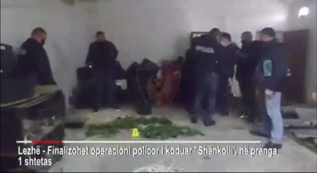 Kultivonte kanabis në bodrumin e banesës, arrestohet 49-vjeçari në Lezhë (EMRI-VIDEO)