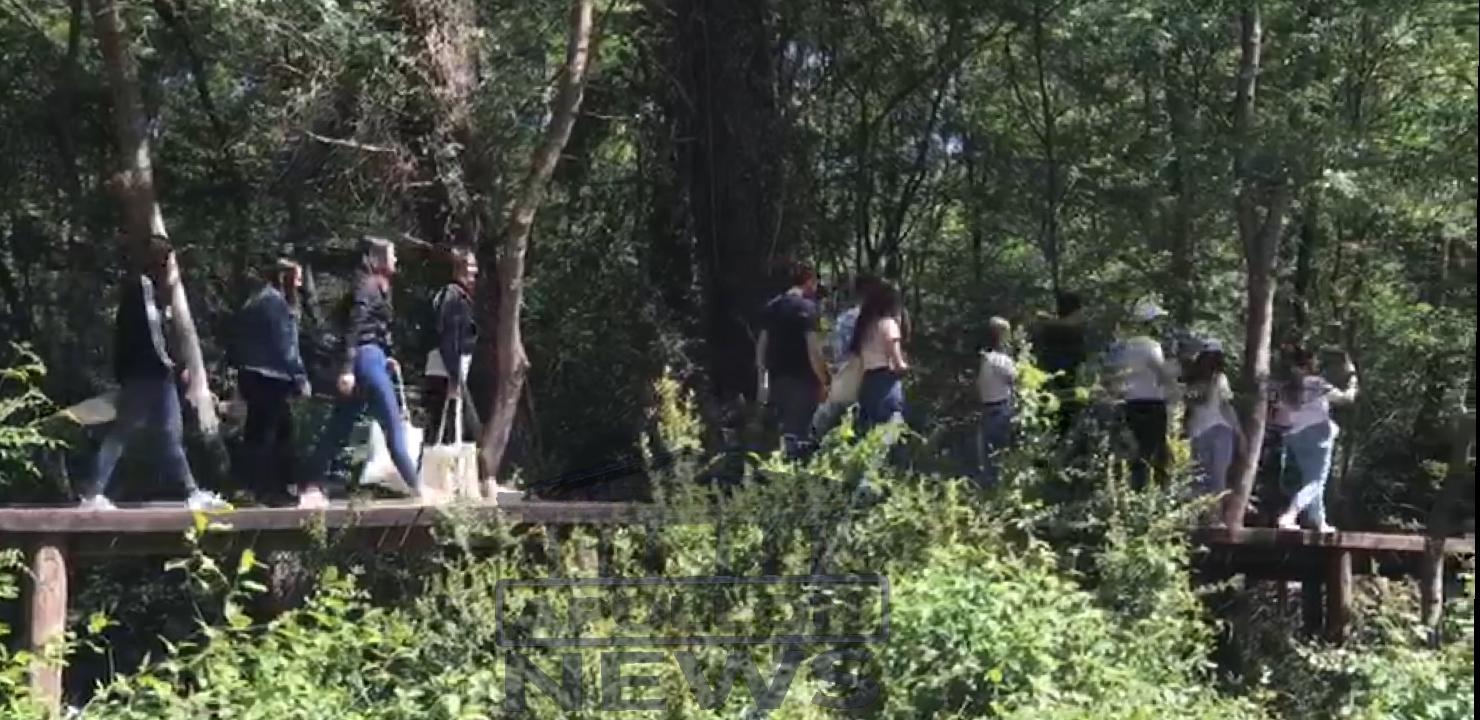 Shënohet dita e Pelikanit Kaçurel në parkun e Divjakës