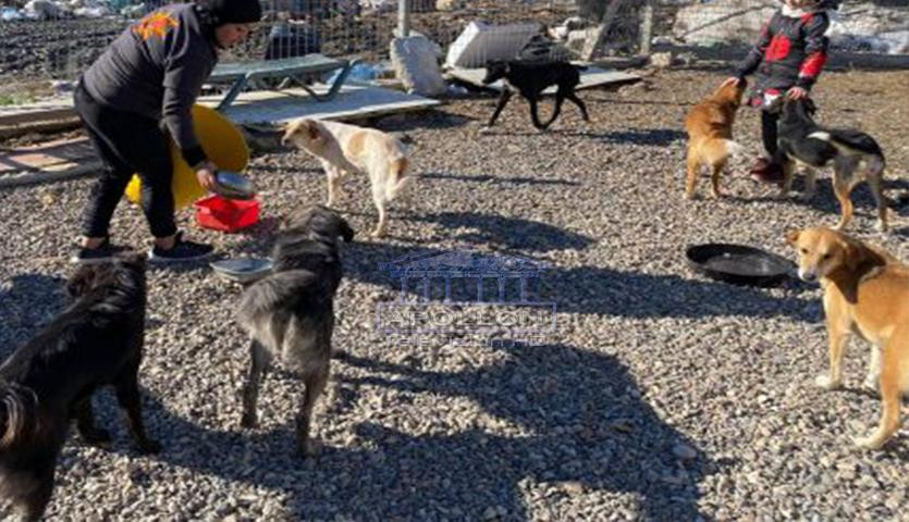 Helmohen 9 qen te qendra vullnetare e kujdesit ndaj kafshëve në Vlorë, gjendet mish i grirë në tokë! Aktivistja: Nesër do niseshin në Itali se do adoptoheshin