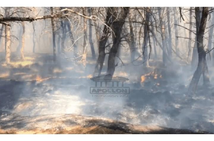 """Zjarr në Pyllin e Sodës në Vlorë, dyshohet e qëllimshme, policia """"kreh"""" zonën për të rënë në gjurmët e autorëve"""