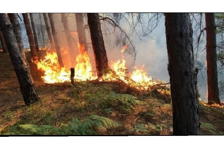 """Zjarret në pyje nga temperaturat e larta, IGJEUM: Nivel """"I LARTË"""" rreziku në Fier, """"I MODERUAR"""" në zona e tjera të vendit"""